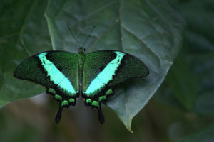 Website-photo-About-Us-Page-butterfly-static
