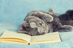 Website-photo-Career-change-course-cat-studying